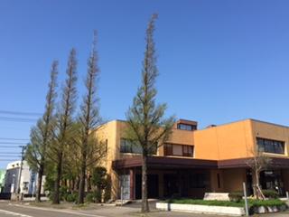 11月:街路樹の四季