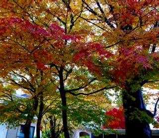 11月:里の秋